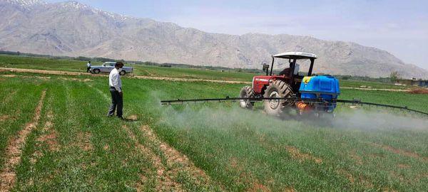 مبارزه با علفهای هرز در یک هزار هکتار از مزارع غلات شهرستان فارسان