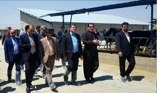 استان کرمانشاه از قطبهای دامپروری در کشور است