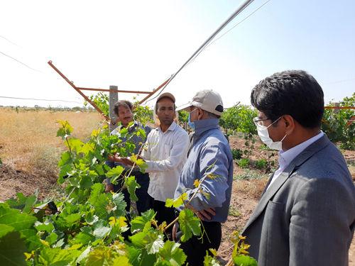 بازدید مدیر باغبانی سازمان از طرحهای باغبانی شهرستان فیروزه