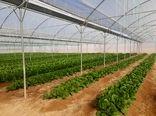 ایجاد 131 گلخانه جدیدالاحداث در استان تهران در سال جاری