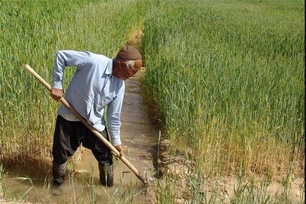 انعقاد 53 هزار و 700 قرارداد بیمه با بهرهبرداران کشاورزی