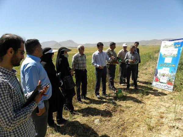 آموزش کلزاکاران شهرستان شهرکرد در قالب مدرسه در مزرعه