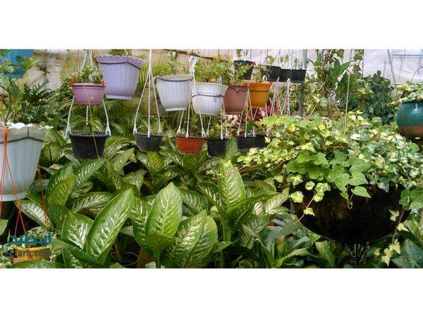 تولید 50 میلیون گل و گیاه در محمودآباد