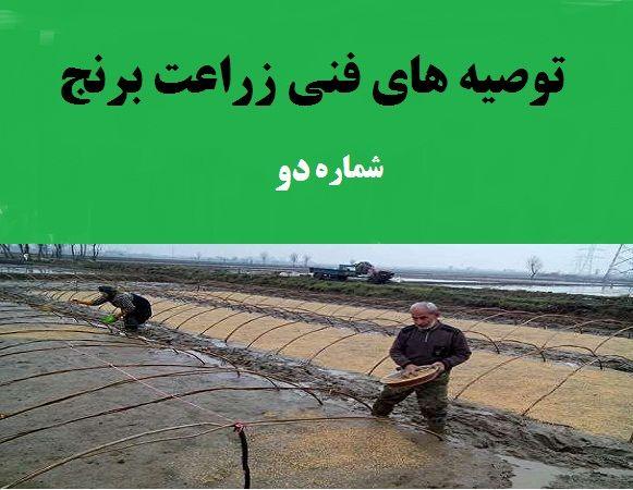 توصیه های فنی زراعت برنج