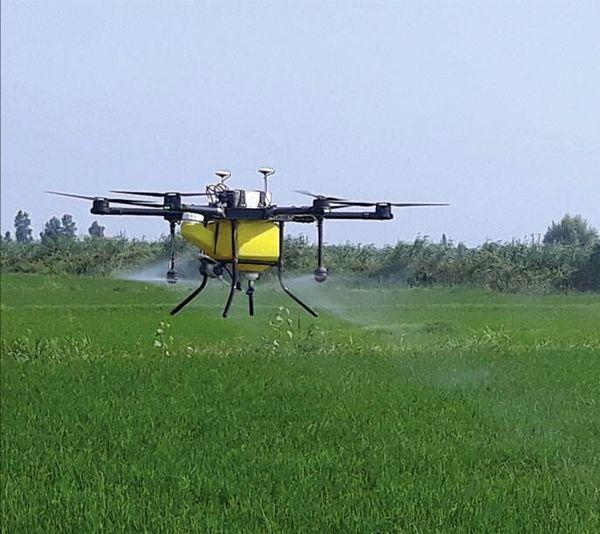 استفاده از پهباد برای سمپاشی مزارع گندم ری علیه آفات سن مادر