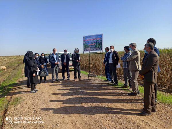 کاشت ذرت بصورت نشایی برای اولین بار در شهرستان دهلران