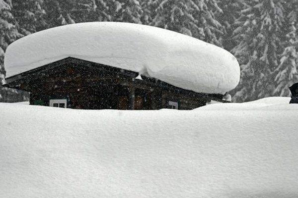 بارش برف چرای دام در کوهپایههای البرز را ممنوع کرد