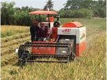 14 هزار هکتار برنج محمودآباد برداشت شد/ تولید 90 هزار تنی
