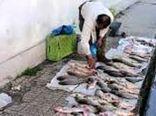 کشف و معدومسازی محموله ماهی حرام در شهربابک