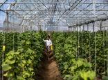 ایجاد ۴۸ هزار هکتار گلخانه تا سال ۱۴۰۴