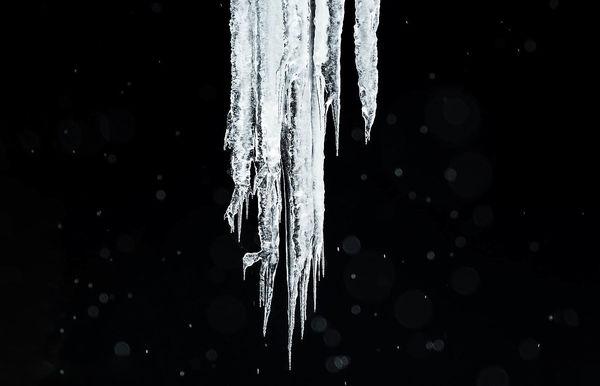 آناتومی قطب شمال