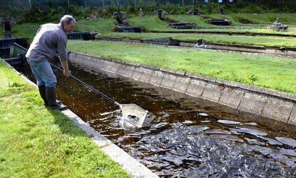 اشتغال 200 نفر در پرورش ماهی سد سیمره