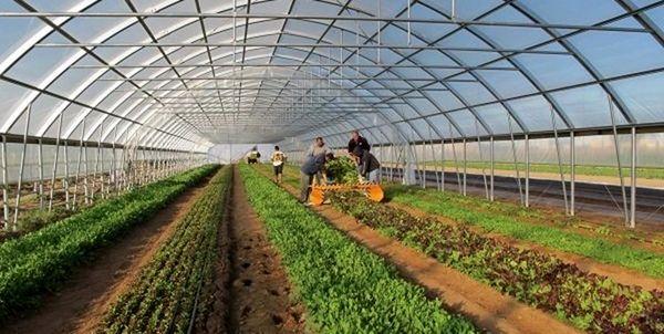 اجرای طرح جهش تولید در محصولات کشاورزی با همکاری ستاد اجرایی فرمان امام در قروه