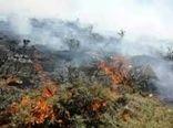 """آتش در جنگل """"گود انجیر"""" شهرستان رستم مهار شد"""