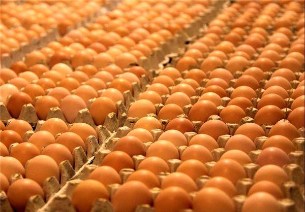 کاهش قیمت تخممرغ با تصمیم کارگروه تنظیم بازار محقق شد