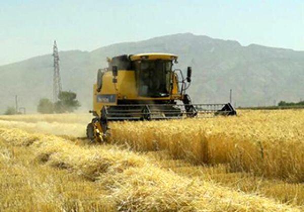 آغاز کشت پاییزه گندم در ۹۰۰۰ هکتار عرصههای زراعی یزد