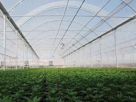 استقبال جهاد کشاورزی استان مرکزی از سرمایهگذاری در بخش گلخانهای
