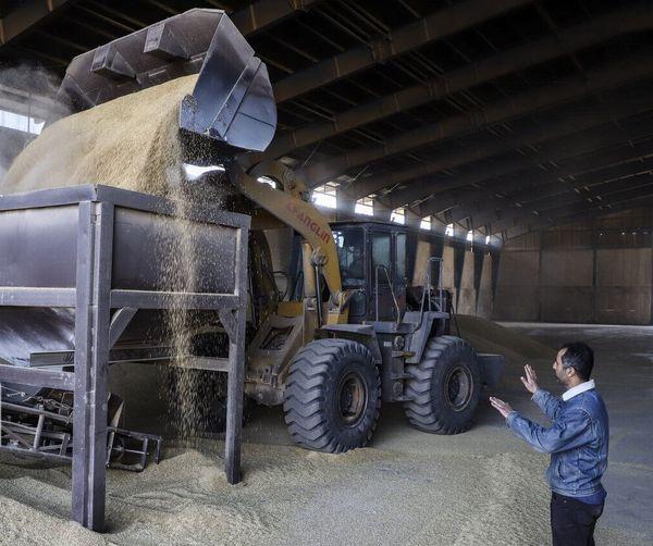 خرید تضمینی بیش از هفت هزار  تن گندم در اصفهان