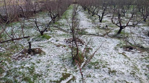 بارش تگرگ به باغات چهارمحال و بختیاری خسارت زد