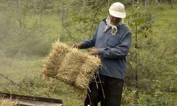 ۴۰ درصد گندم تولیدی خراسان شمالی بیش از نیاز استان است