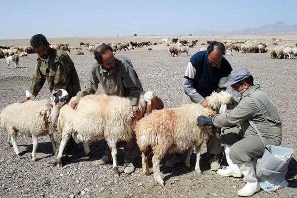 ۲ میلیون واحد دامی عشایر آذربایجانغربی علیه بیماری احشام واکسینه شدند