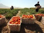 ارزش محصولات کشاورزی دهلران ۱۲ هزار میلیارد ریال است
