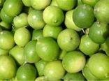 «فارس» دارای رتبه اول تولید لیمو ترش در کشور