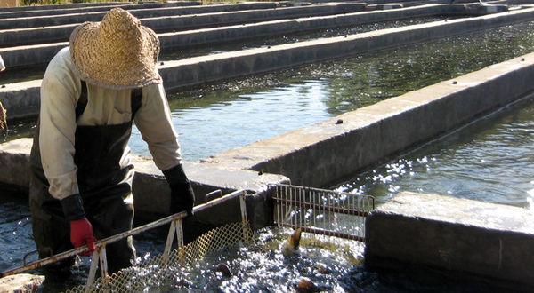 پیشبینی پرورش 200هزار تن ماهی قفسی در خزر