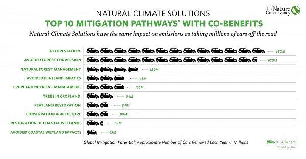 درختان بیشتر بزرگترین راه حل طبیعی در زمینه تغییرات آب و هوایی