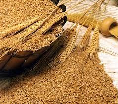 آنتیاکسیدانها و پلاستیک را میتوان از محصولات جانبی سبوس گندم تولید کرد