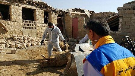 جزئیات اقدامات سازمان دامپزشکی کشور در زلزله کرمانشاه