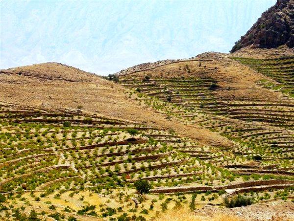 تشدید زمینخواری با توسعه باغات روی اراضی شیبدار