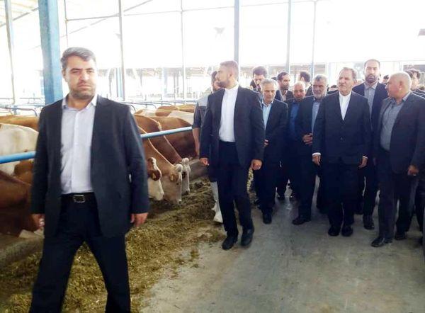 آغاز بهرهبرداری از پروژه گاوداری ۱۰۰۰ رأسی سیمنتال در چناران