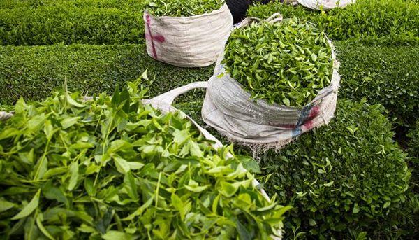 ابلاغ ضوابط خرید تضمینی محصولات زراعی
