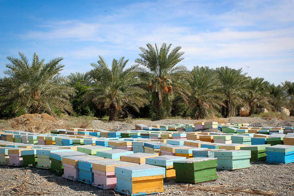 کوج زنبورداران کشور به هشتبندی