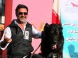 نژاد اصیل سگ ایرانی به رسمیت شناخته شد