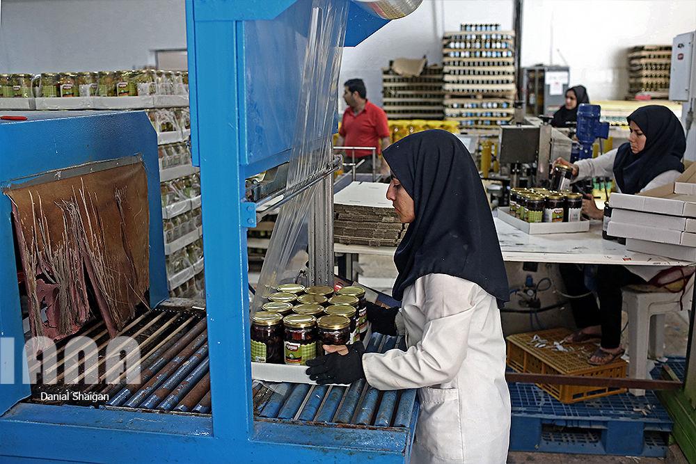 کارخانه تولید خیارشور و ترشیجات