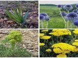 استان بوشهر مستعد توسعه کشت گیاهان دارویی