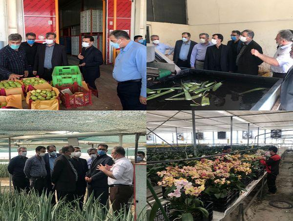 بازدید معاون وزیر جهاد کشاورزی از اولین واحد تولید آلوئه ورا در استان تهران