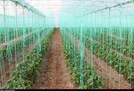 7  پروژه بزرگ کشاورزی در خراسان شمالی با حضور معاون رییس جمهور بهرهبرداری میشود