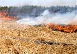 آتش زدن مزارع دودی در چشم تکتک ما