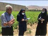 آغاز رسمی طرح نسخه نویسی گیاه پزشکی در شیراز