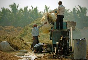 تامین مالی کشاورزان خردهپا رواندا و تانزانیا