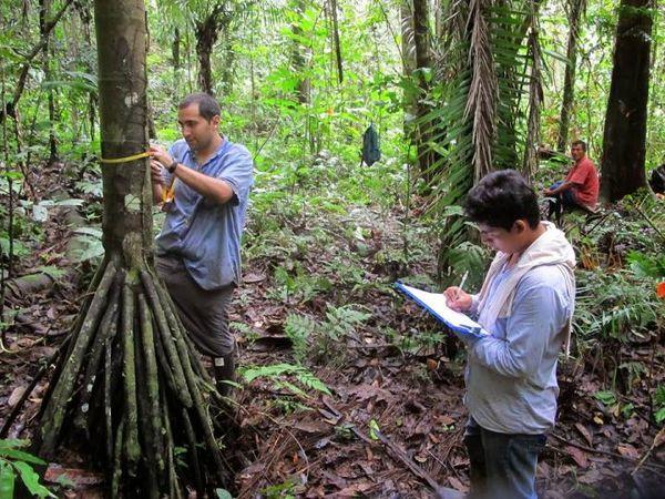 انگیزههای مالی میتواند تنوع زیستی جنگلهای استوایی را حفظ کند