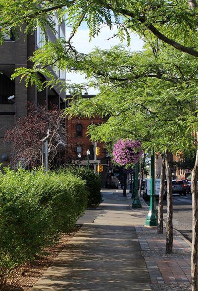 ارزش سالانه درختان در شهرهای بزرگ 500 میلیون دلار است