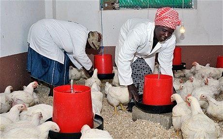 دامپینگ؛ بهانه انجمن مرغداران آفریقای جنوبی