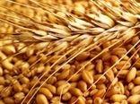 هشت هزار تن بذر گواهی شده گندم در استان قزوین تولید میشود