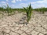 خسارت 41 هزار میلیارد ریالی خشکسالی به کشاورزی فارس