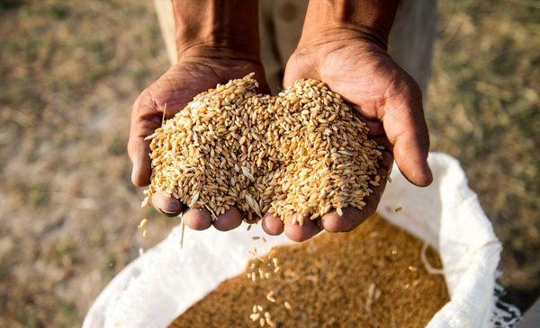 کاهش قیمت جهانی مواد غذایی به پایینترین سطح دو سال گذشته