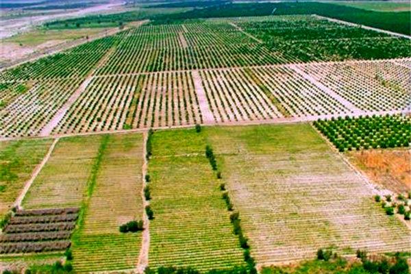 نقش حفظ کاربری اراضی کشاورزی درتوسعه اقتصاد کشور